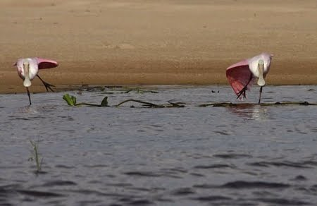 Man-gua-rí - Reserva Biológica do Guaporé