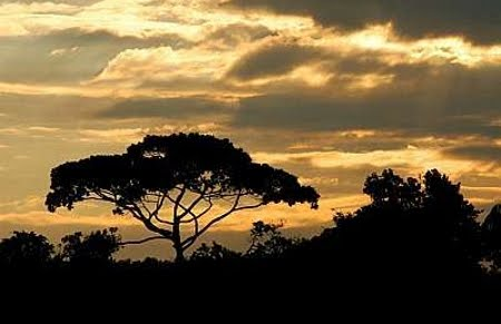 Reserva Biológica Estadual do Traçadal | Rondônia