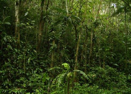 Área de Relevante Interesse Ecológico Projeto Dinâmica Biológica de Fragmentos Florestais | Amazonas