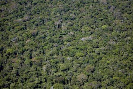 Estação Ecológica do Grão Pará | Pará