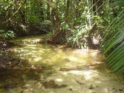 Estação Ecológica de Iquê | Mato Grosso