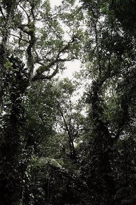 Unidade de conservação Estadual da Mata Xem-Xem - Paraíba