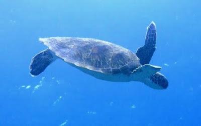 Área de Proteção Ambiental de Piaçabuçu em Alagoas