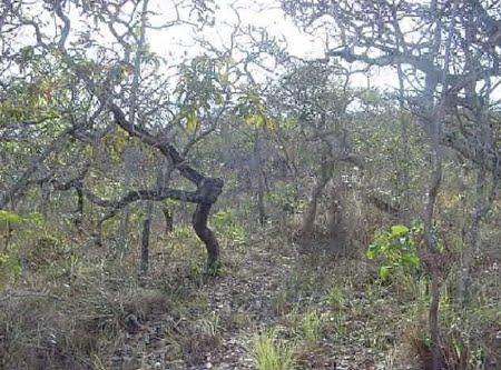 Estação Ecológica Mata dos Ausentes | Mina Gerais
