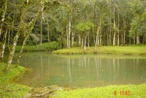 Parque Estadual de Campinhos   Paraná