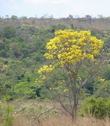 Parque Estadual do Cerrado   Paraná