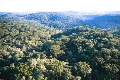Parque Nacional das Araucárias