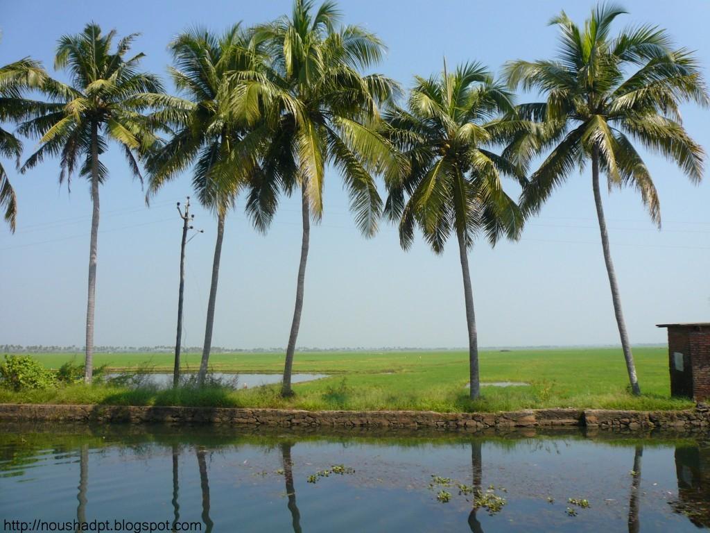 | NATURE |: Kumarakam in kerala in India,.... a great ...