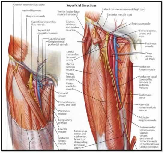 Canalización de vena femoral por ecografía - MI REINO POR UN CABALLO