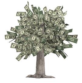 Les conseillers forestiers de l 39 outaouais comment faire pousser de l 39 argent dans les arbres - Faire pousser des endives dans l eau ...