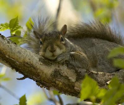 Hyperblogal Tree Rats In Abundance