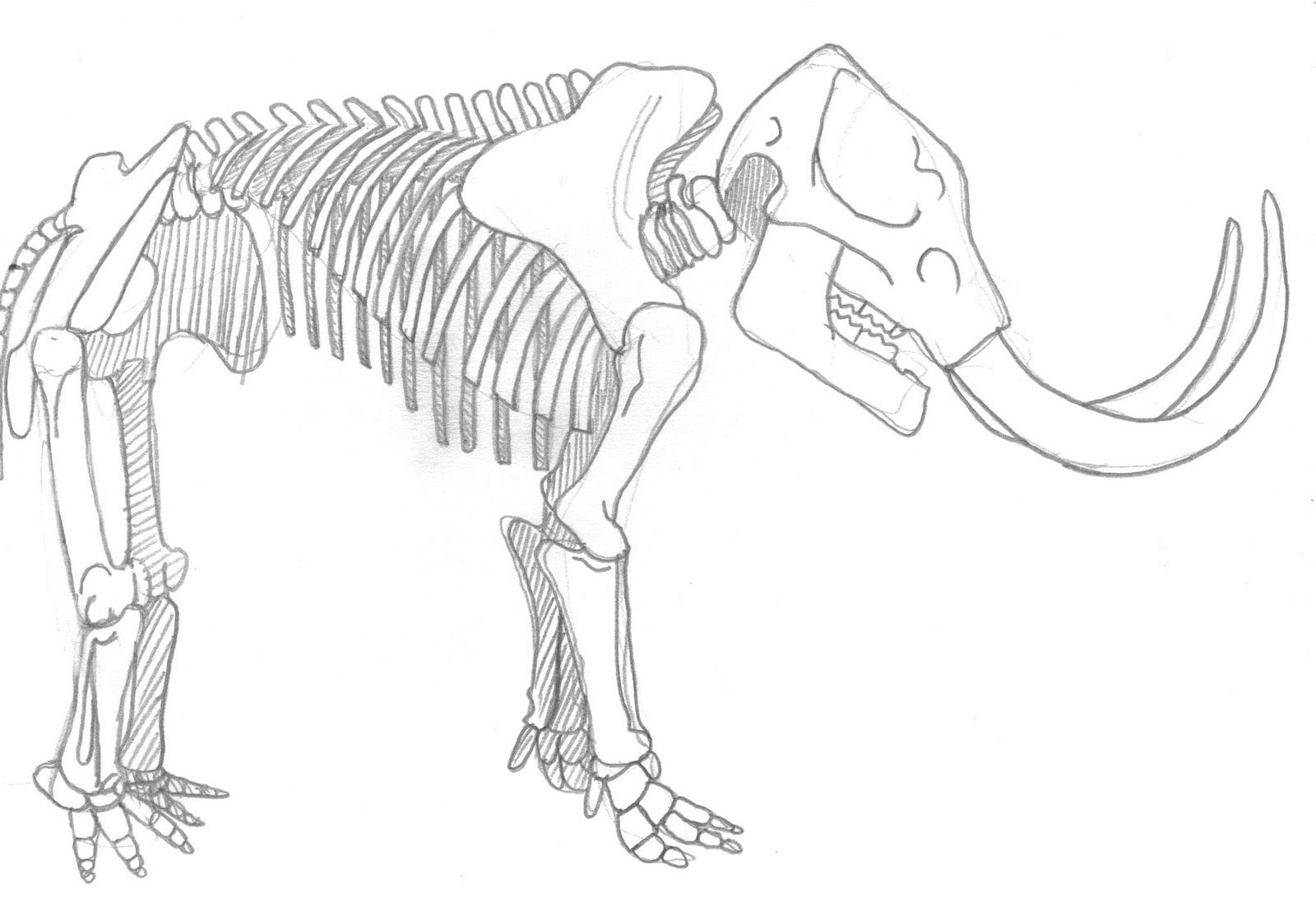 ART Evolved: Life's Time Capsule: Drawing Mega-Mammals
