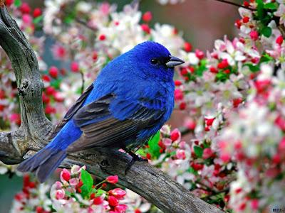 أيها الطير .. خذني معك BlueBird.jpg