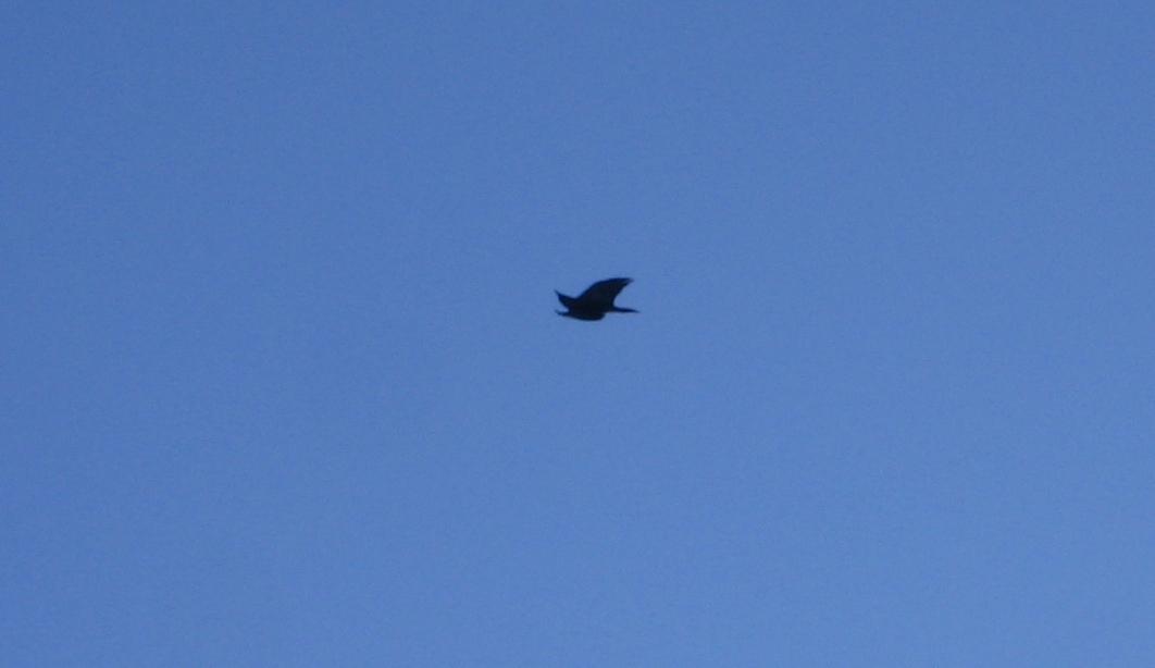 Hip roll raven sky