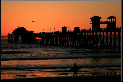 Sunset, seagull, surfer - good timing