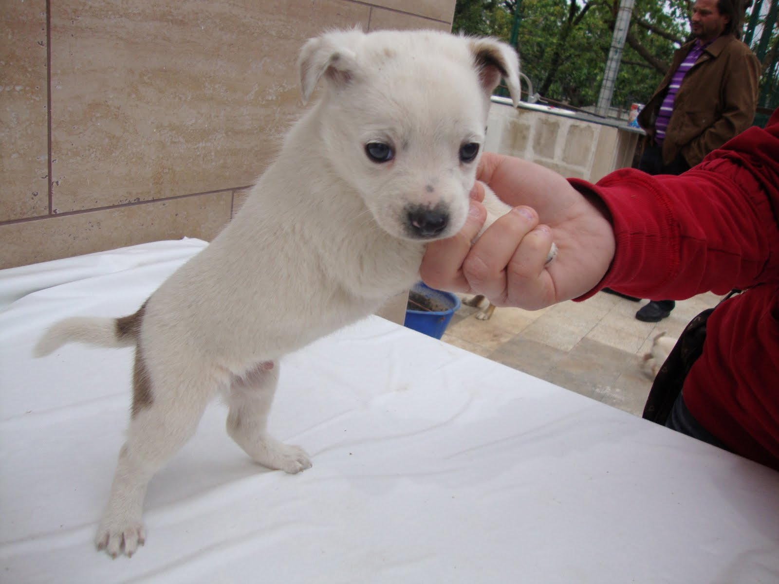 Immagini di cani di piccola taglia for Marsupio per cani di piccola taglia