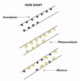 Natural Braziliss: HAIR STRUCTURE