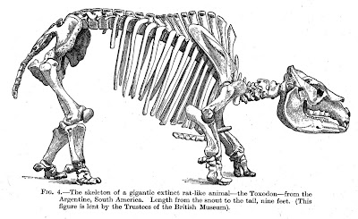 cryology and co.: Darwin's rat and other strange mammals