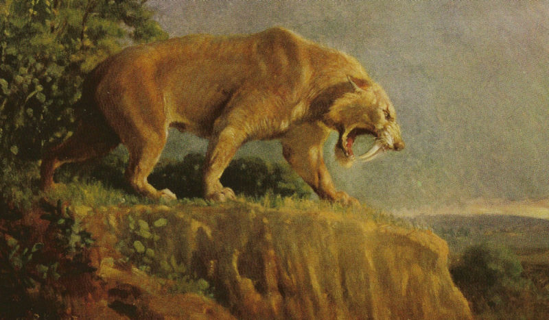 Paleomammiferi La Tigre Dai Denti A Sciabola Il Predatore Perfetto