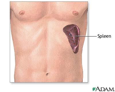 Папиломи в стомаха и червата полипи