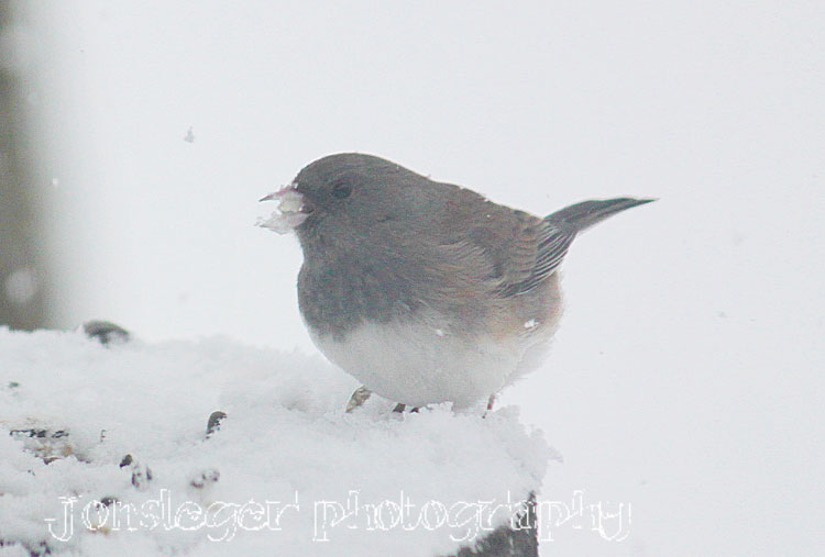Northern Illinois Birder: First Snowfall of the Season ...