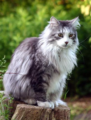 Smart Ebook Kucing