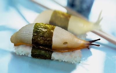 Sushi Würmer