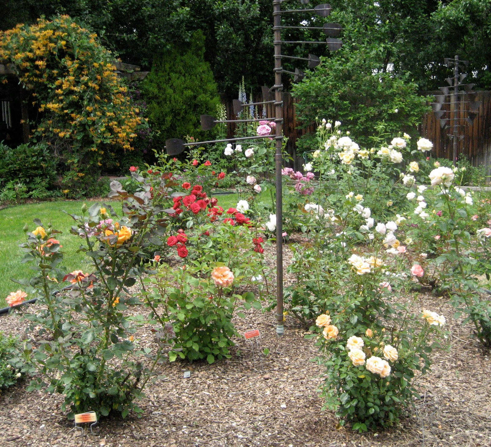 Mulching Roses Bushes: JeffCo Gardener: Spring Rose Care By Donna Duffy