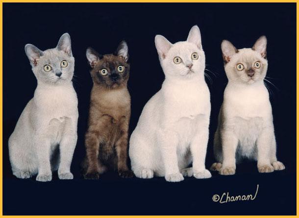 Cat Care: 2010