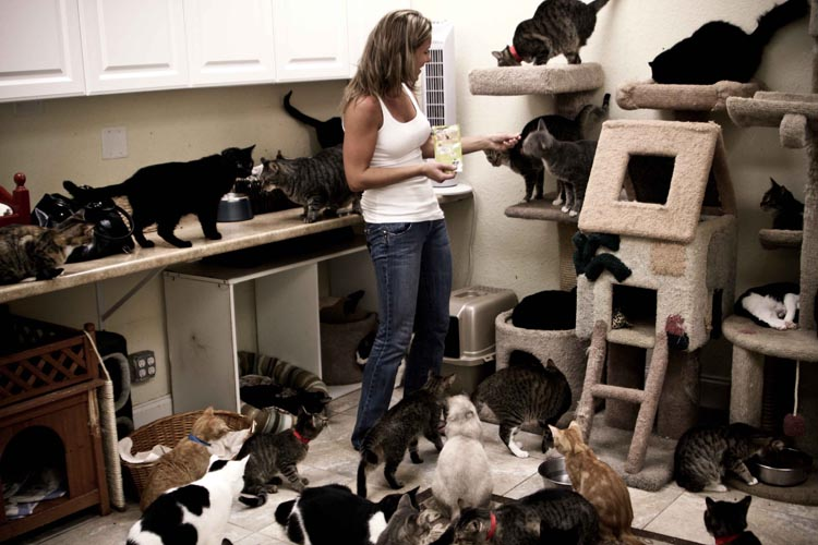 Room With Nothing In It: Your Daily Cute: There's Nothing Crazy About Being A Cat Lady