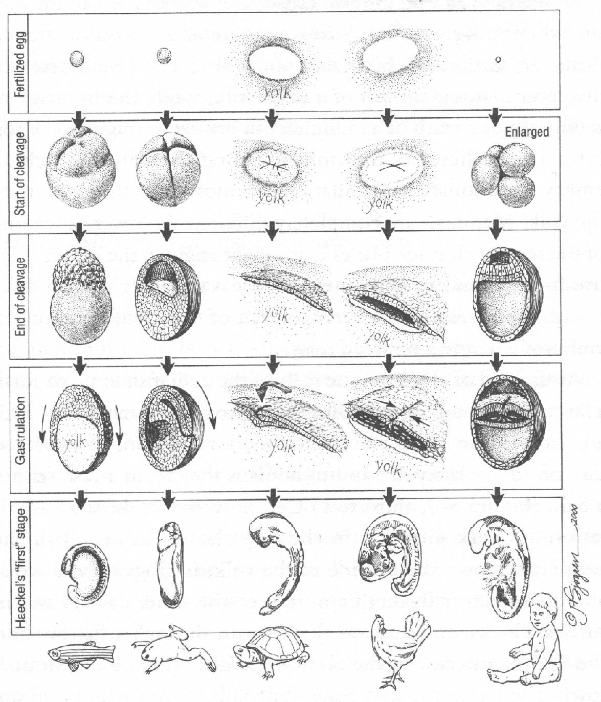NAMs出版プロジェクト: Haeckel=...