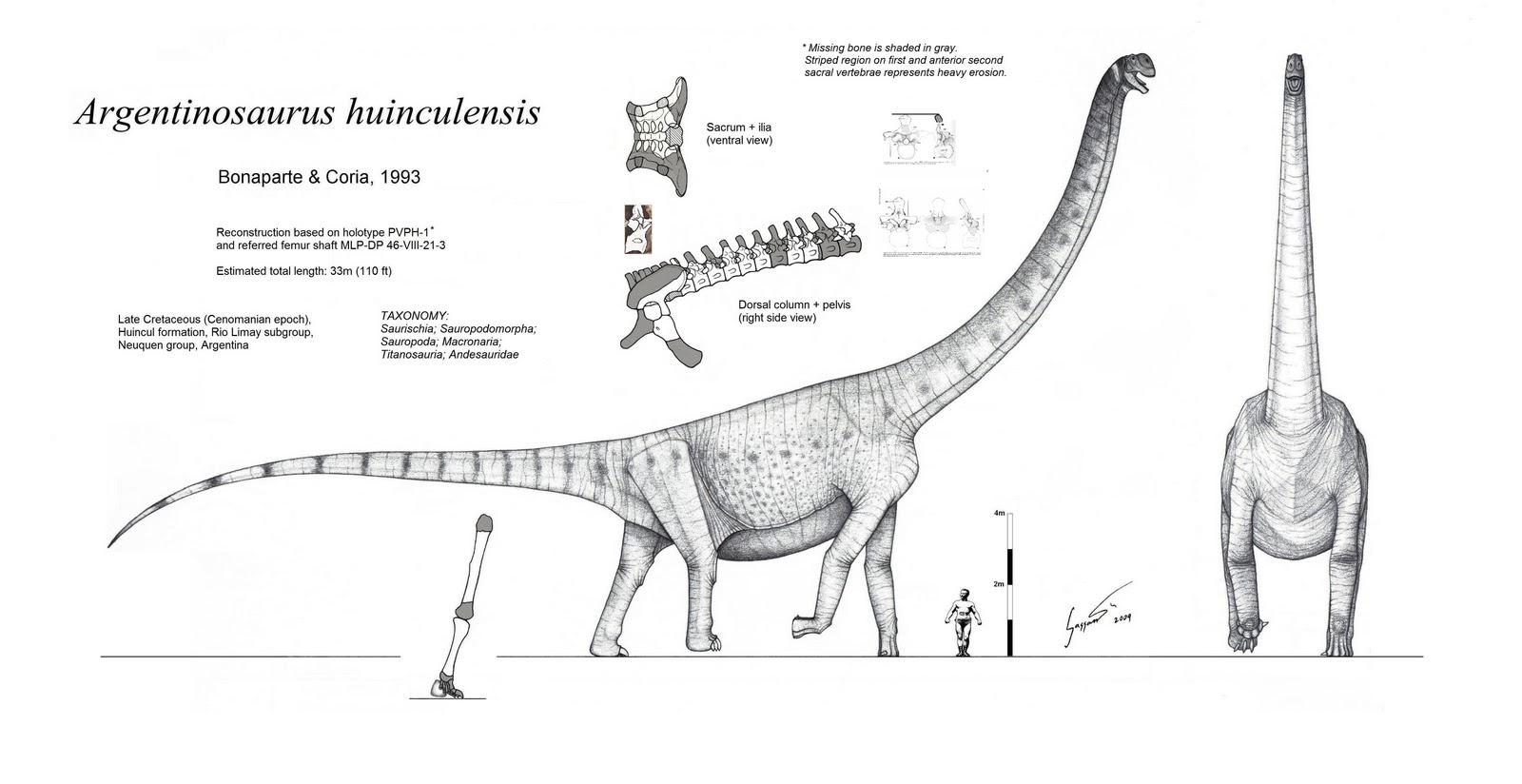 Forgotten Giants 2 Argentinosaurus