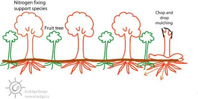 Nitrogen-fixing support trees