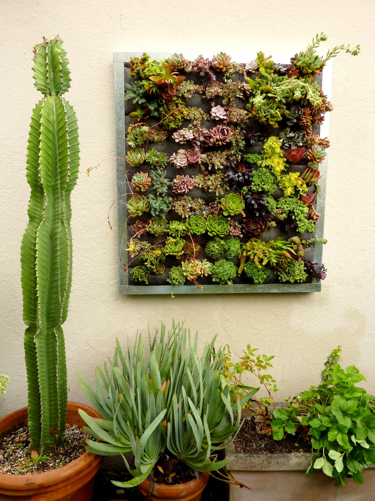 Plants On Walls Vertical Garden Systems Succulent
