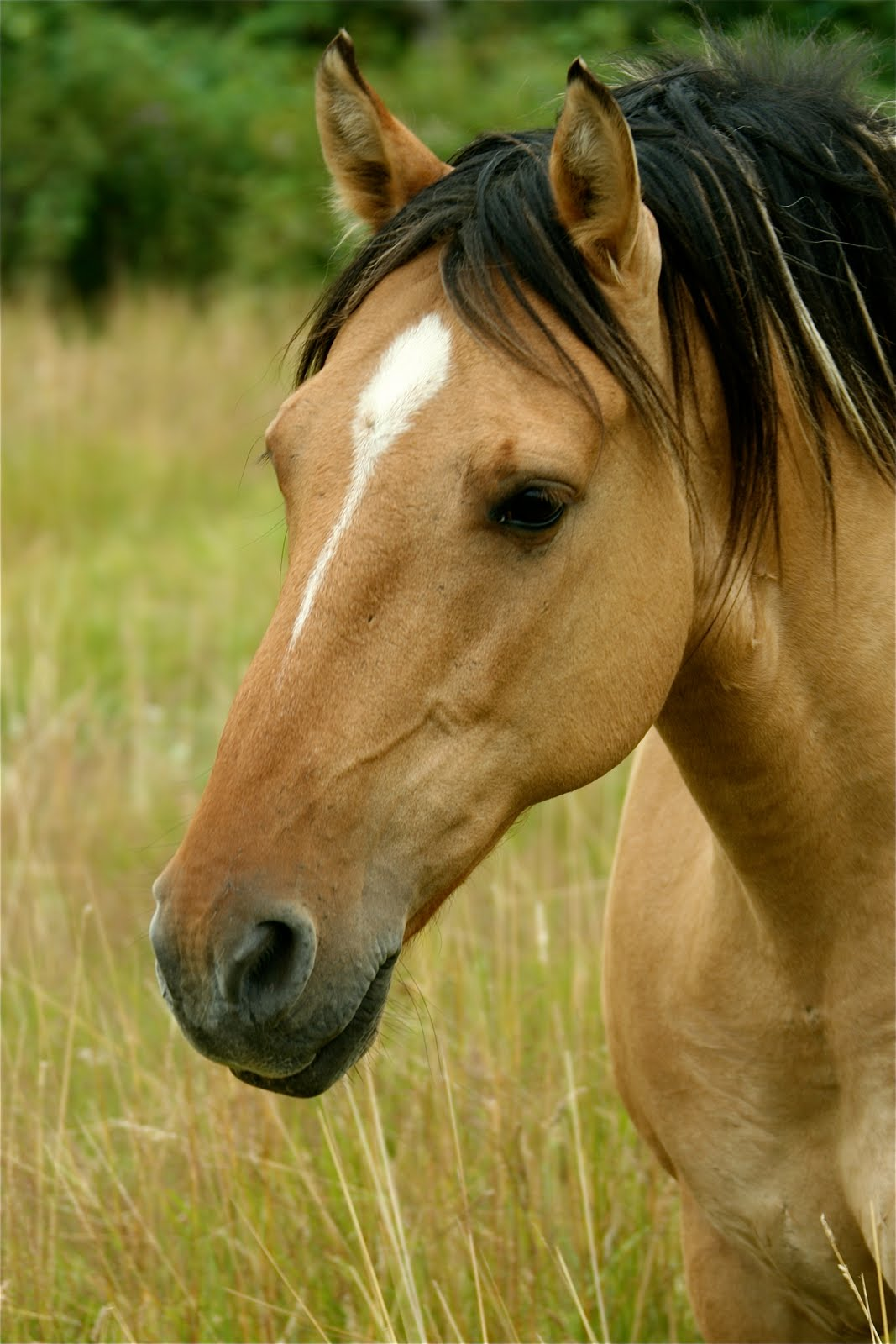 2010 Mustang For Sale >> Mustangs Sale: Our Kiger Mustangs