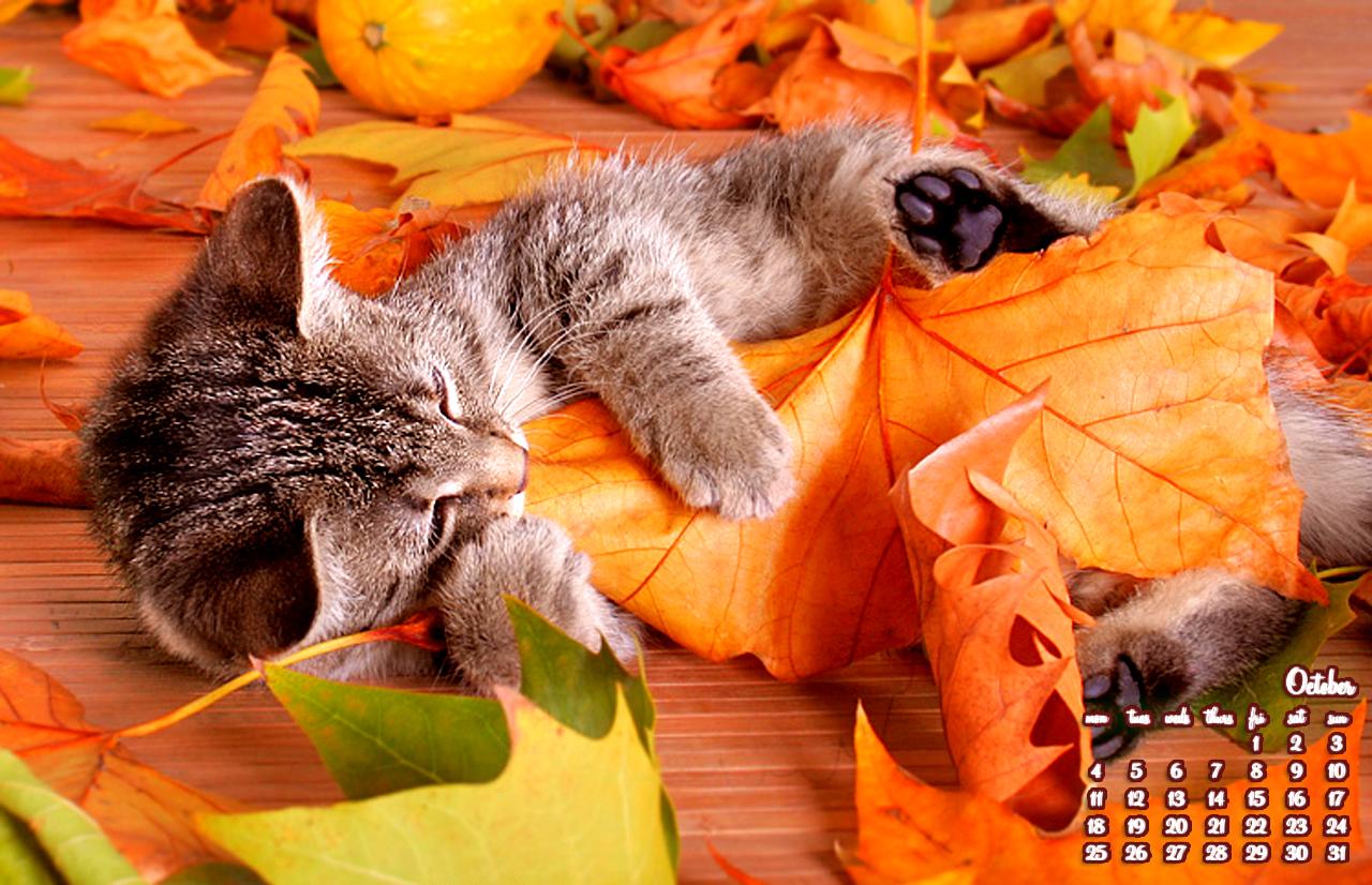 Cute Cats And Kittens Wallpaper Hd Cat Themes 15 Красиви есенни Quot дрешки Quot за Вашия десктоп м Октомври