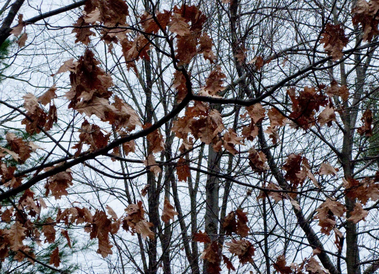 Yerry Hill Road Haiku November 2009