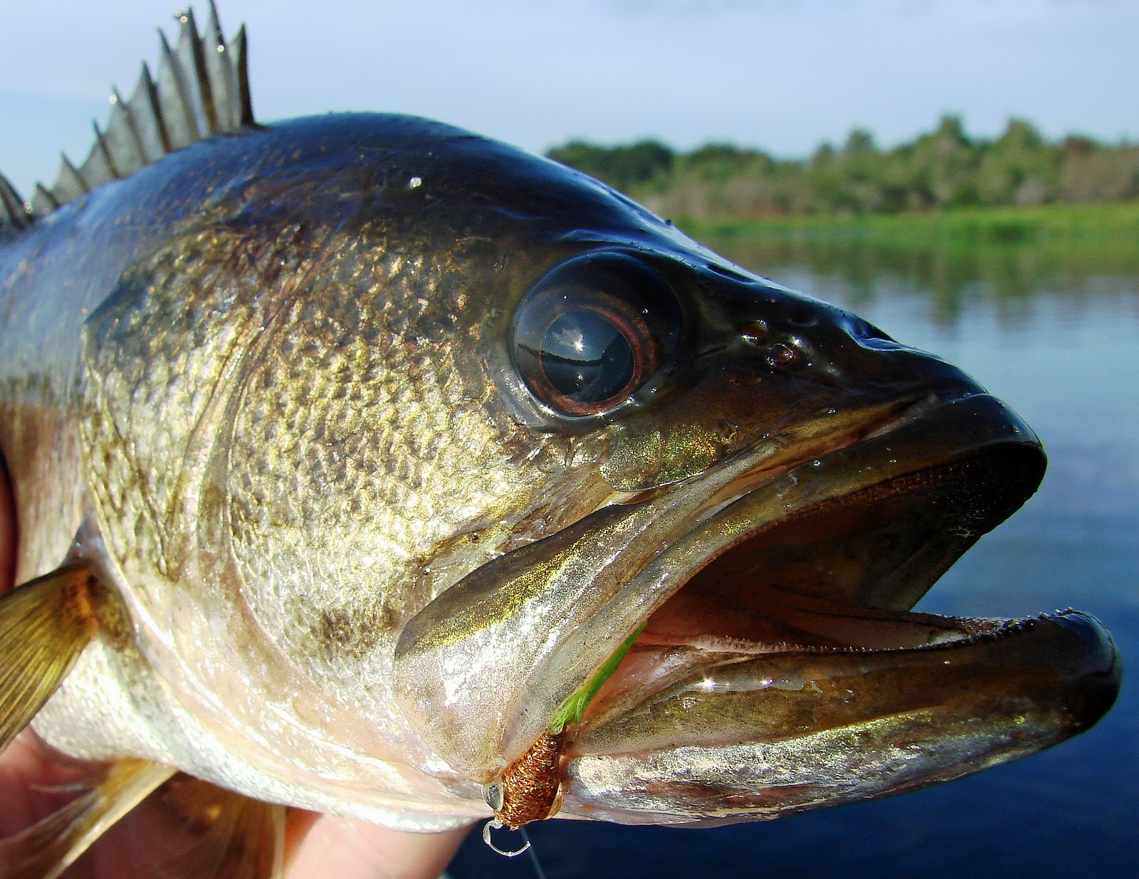Southern Kayak Kronicles: Lightly fished Lake Manatee is a ...