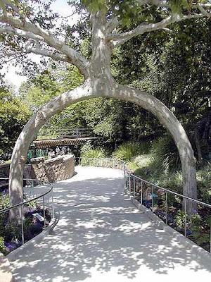 pohon hidup berongga