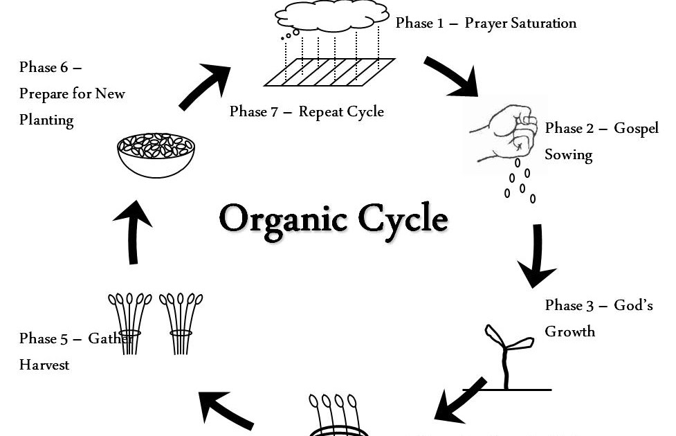 Fellowship Project: Organic Cycle