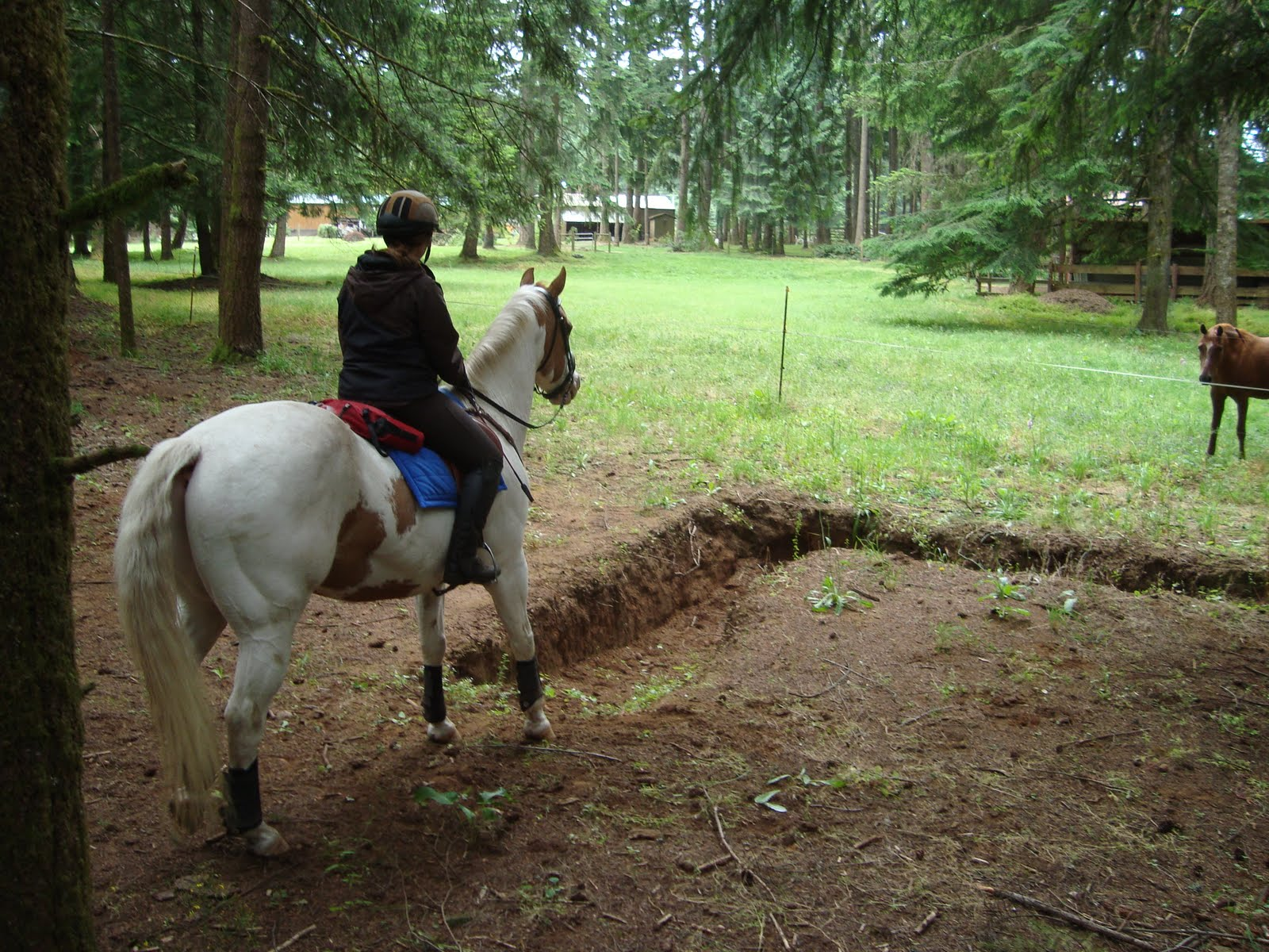 Equine Mine: Mountain Trail Course
