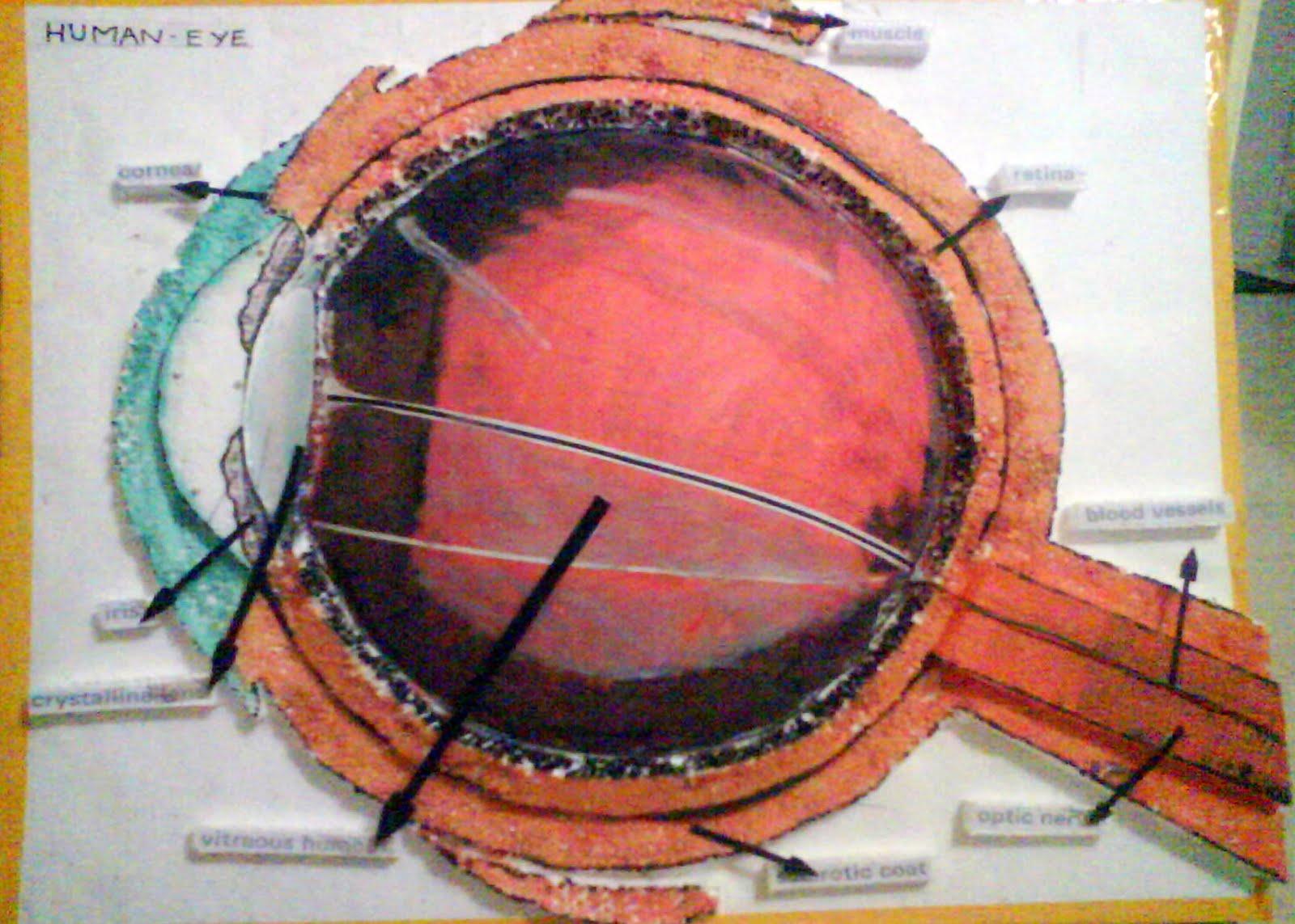 jaw anatomy diagram ear anatomy diagram projects