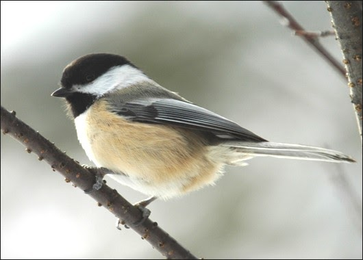 Ashley S Acres Birdhouse Plans For Wrens Chickadees And