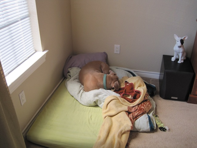 The Happy Pit Bull Blog A Unique Dog Bed Solution