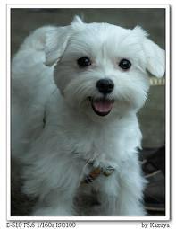 可愛的動物: 小狗的種類