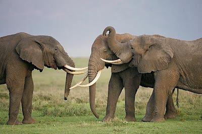 Viaje a Tanzania con El Turista - Aventura africana