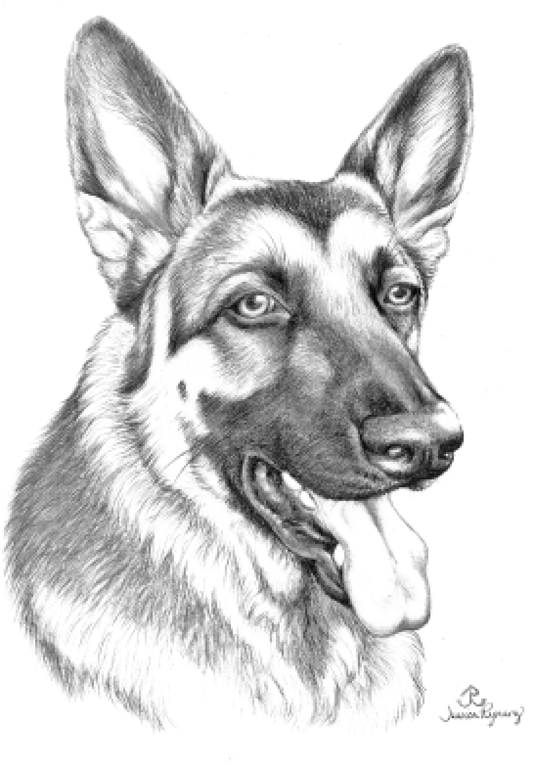 German Shepherd Printable Coloring Pages