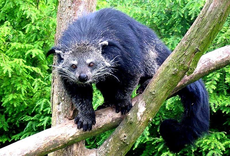 Arctic Cat Bearcat  Forum