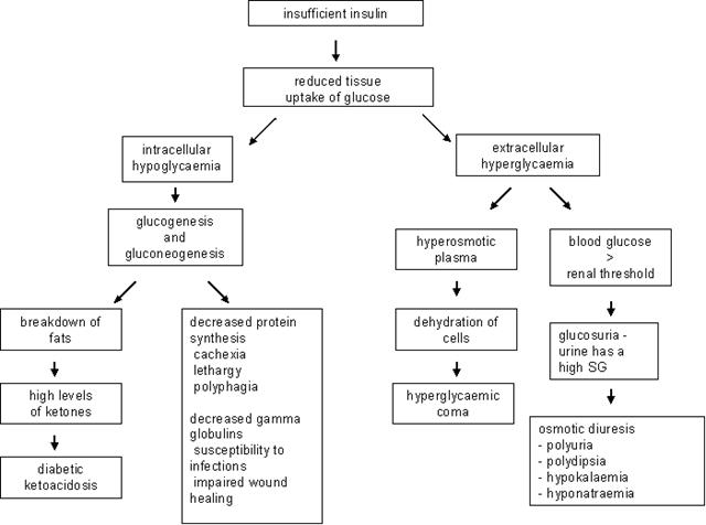 Pathophysiology of Diabetes Mellitus   Nurseonlineph ...