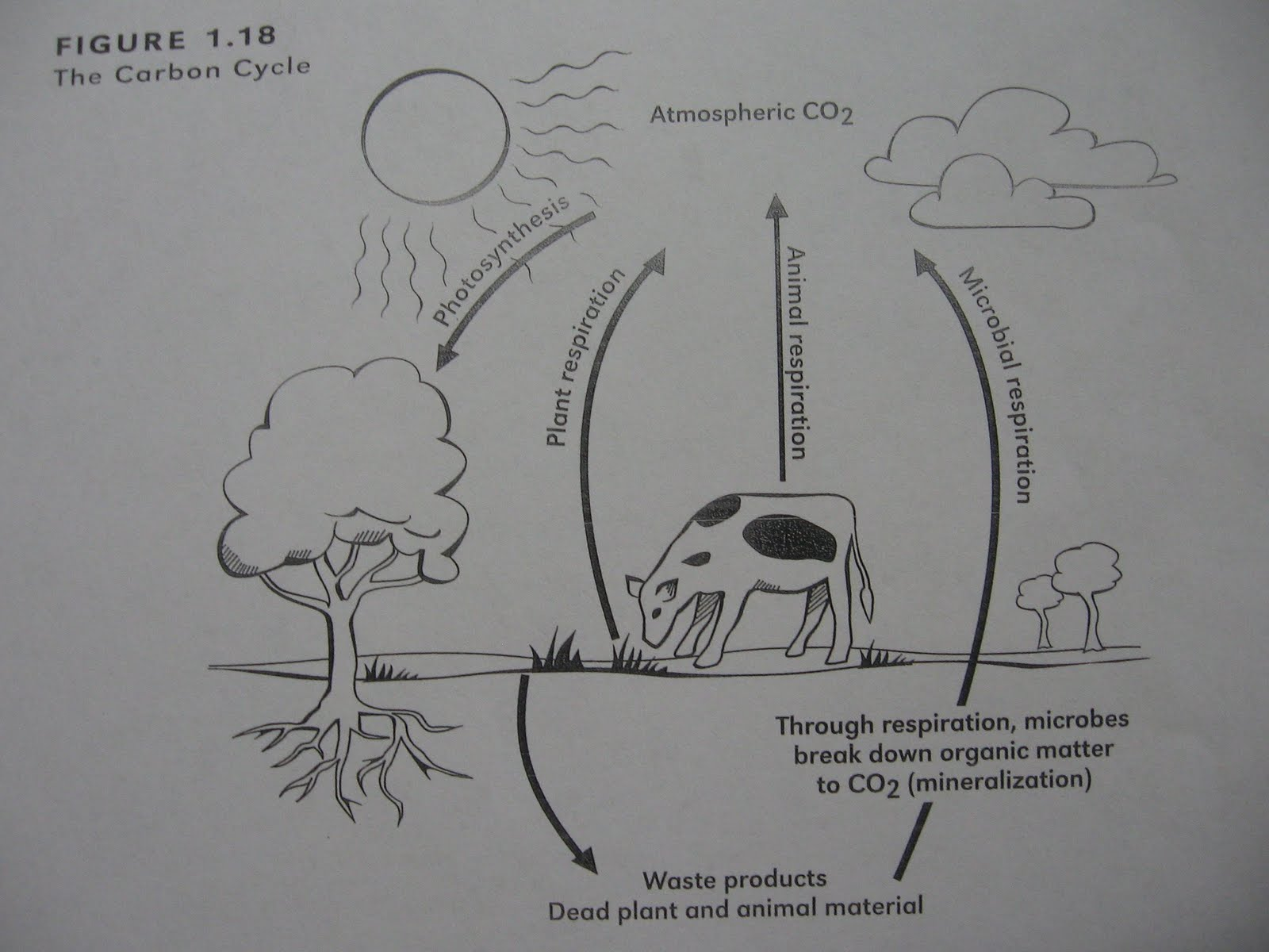 medium resolution of for homework some people need to redo some of their answers we read about the nitrogen cycle and looked at a diagram that shows how nitrogen fixing